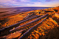 Driftwood on shore of Great Slave Lake at sunset<br /> Hay River<br /> Northwest Territories<br /> Canada