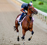 LOUISVILLE, KENTUCKY - MAY 01: Dunbar Road, trained by Chad Brown, exercises in preparation for the Kentucky Oaks at Churchill Downs in Louisville, Kentucky on May 1, 2019. John Voorhees/Eclipse Sportswire/CSM