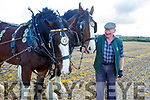 Coleman Cogan with his horses at the Ballyheigue ploughing match on Sunday.