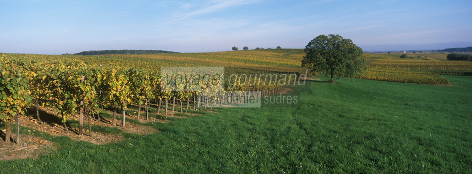 Europe/France/Alsace/67/Bas-Rhin/Cleebourg : Vignoble