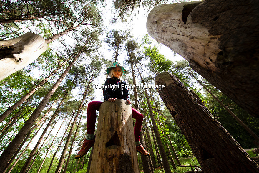 08/08/19<br /> <br /> (Previously unreleased photo taken on 09/06/19)<br /> <br /> Astri Skinner enjoys her vantage point at Calke Explore, a new natural play hub at the National<br /> Trust's Calke Abbey in Derbyshire. The woodland play area includes a human-sized badger sett and<br /> giant hotel, outdoor table tennis and facilities for visitors with special accessibility needs.<br /> <br /> <br /> All Rights Reserved, F Stop Press Ltd +44 (0)7765 242650 www.fstoppress.com rod@fstoppress.com