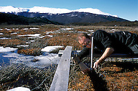 Matt Robson assembles a filter over a plot of peat in the Laguna Negra bog. Mylar filters block the summer's higher level of ultraviolet radiation, removing the effects of the ozone hole, allowing the team to compare growth and decay rates between filtered and unfiltered plots.<br />