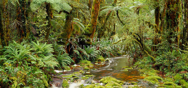 Forest, mosses and river. Preservation Inlet. Fiordland National Park. New Zealand.