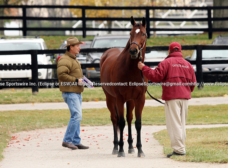 2011 Horse of the Year, Havre De Grace at the Fasig Tipton Kentucky November Sale.  Consigned by Taylor Made Sales.  November 03, 2012.