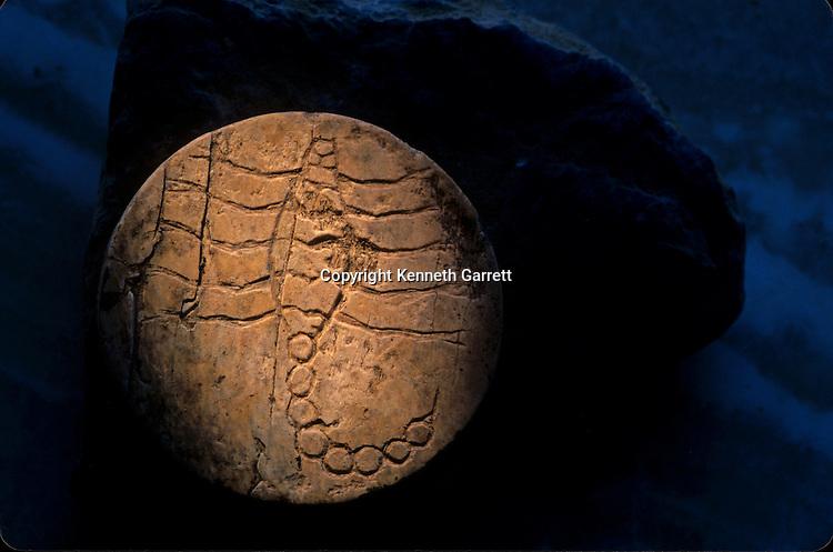 Scorpion seal, Oxus Civilization; Turkmenistan; Gonor Depe site; Victor Sarianidi; Archaeology; BMAC complex