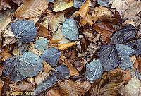 AU13-010c  Fallen autumn leaves in rain