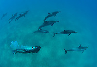 Scuba diver swimming with spinner dolphins over the south shores of Maui Hawaii.<br />