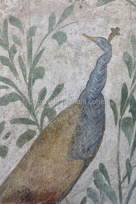 Fresco detail of a peacock, on the Lararium, a shrine dedicated to the guardian spirits of the household, in the Casa del Criptoportico, or House of the Cryptoporticus, Pompeii, Italy. The lararium adjoins a peristyle garden and has a lower black border painted with plants and flowers. The house is one of the largest in Pompeii and was owned by the Valerii Rufi family and built in the 3rd century BC. It takes its name from the underground corridor or cryptoporticus used as a wine cellar and lit by small windows. Pompeii is a Roman town which was destroyed and buried under 4-6 m of volcanic ash in the eruption of Mount Vesuvius in 79 AD. Buildings and artefacts were preserved in the ash and have been excavated and restored. Pompeii is listed as a UNESCO World Heritage Site. Picture by Manuel Cohen