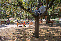 Andrew Benedict-Philipp '15, left, and Jeff Johnson '14 hang out in an oak tree in the Academic Quad on April 22, 2014. (Photo by Marc Campos, Occidental College Photographer)