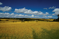 Countryside on the Black Isle, Highland<br /> <br /> Copyright www.scottishhorizons.co.uk/Keith Fergus 2011 All Rights Reserved