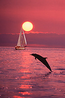 sailboat and leaping pantropical spotted dolphin, Stenella attenuata, at sunset, digital composite