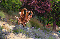 'Teak Orchid' tree root sculpture in Tiburon, California garden