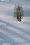 Trees cast long shadows on snowy fields, Washington.