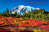Tom Mackie, LANDSCAPES, LANDSCHAFTEN, PAISAJES, photos,+America, American, Americana, Mount Rainier National Park, North America, Pacific Northwest, Paradise Meadow, Tom Mackie, USA+, Washington, autumn, autumnal, blue, colorful, colourful, fall, horizontal, horizontals, huckleberries, huckleberry, inspira+tion, inspirational, inspire, landscape, landscapes, natural, nature, no people, peak, red, rugged, scenery, scenic, season,+snow capped mountains, wilderness,America, American, Americana, Mount Rainier National Park, North America, Pacific Northwest+,GBTM170489-1,#l#, EVERYDAY