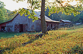 Old barn in meadow