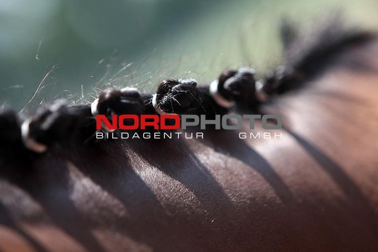 23.07.2013., Zagreb, Croatia - Hot summer days horse handlers enjoying refreshing horses with water and walking them on hippodrome<br /> <br /> Foto &copy;  nph / PIXSELL / Grgur Zucko