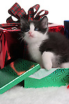 A black and white cat coming out of a Christmas Present box