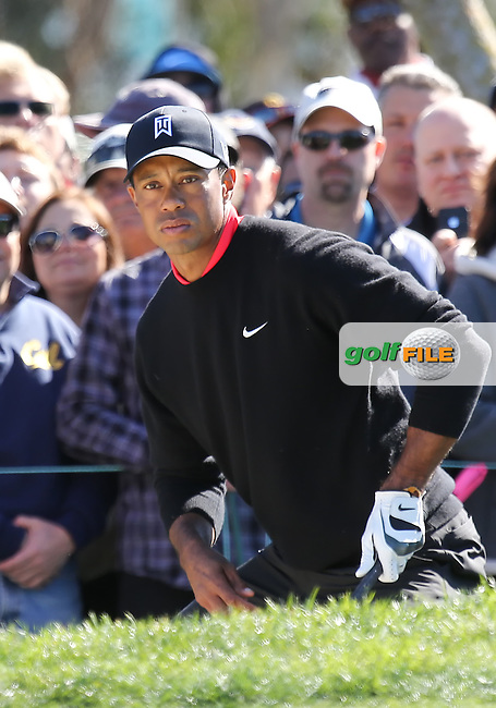 28 JAN 13  Eventual Champion Tiger Woods in action during Sunday's Final Round of The Farmers Insurance Open at Torrey Pines Golf Course in La Jolla, California. (photo:  kenneth e.dennis / kendennisphoto.com)