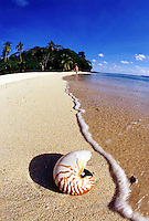 A wave washes up on a nautilus shell, Nautilus pompilius, while a women (MR) in a bikini approaches on a beach at the Wakaya Club, Fiji.<br />