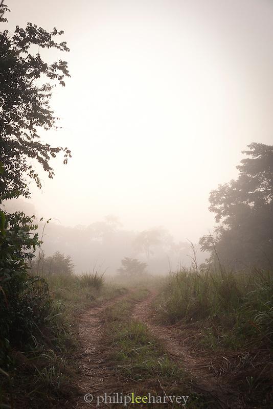 Misty track at sunrise.