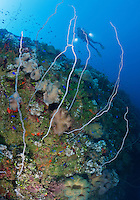 RJ2109-D. Wire corals and Mushroom Leather Corals (Sarcophyton sp.) sprout from the hull of the Yamagiri Maru shipwreck, a 436 foot long intact Japanese passenger/cargo ship lying on her port side in 110 feet of water. Truk (Chuuk) Lagoon, Micronesia, Pacific Ocean.<br /> Photo Copyright &copy; Brandon Cole. All rights reserved worldwide.  www.brandoncole.com