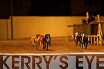 TOP DOG: Winner of Rathmore Churches Development Final no. 2 Blazeaway Honcho, 2nd was no.6 Light Shift and 3rd was no.3 Whitty John at the Rathmore Churches Development Night at the Dogs Kingdom Greyhound Stadium on Saturday.   Copyright Kerry's Eye 2008