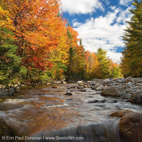 This is the image for September in the 2016 White Mountains New Hampshire calendar. Autumn foliage along the Gale River in Bethlehem, New Hampshire USA. The calendar can be purchased here: http://bit.ly/17LpoRV