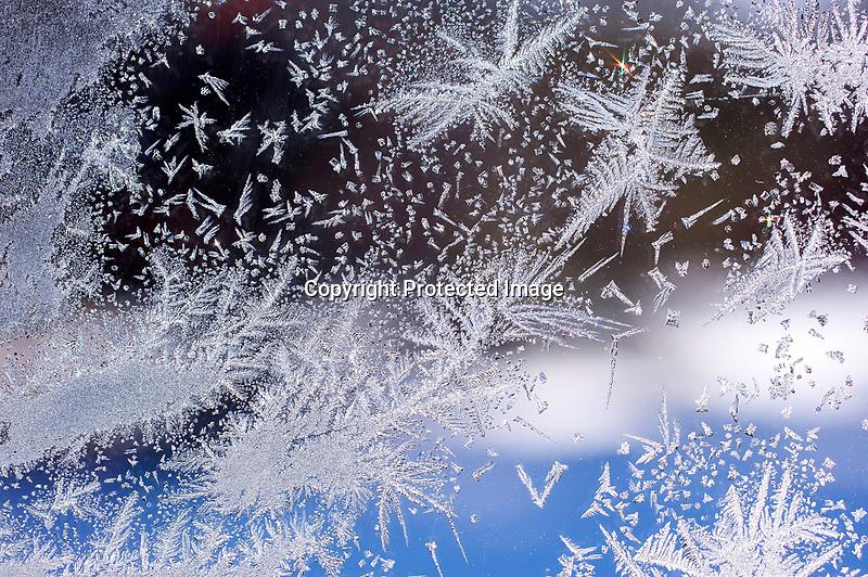Morning Window Frost