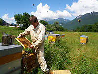 Inspection of the hives during the production of honey in Annecy./ Inspection des ruches pendant la production de miel à Annecy.