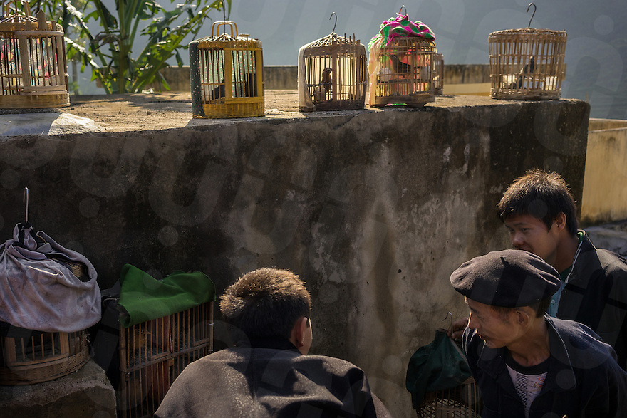 September 22, 2014 - Meo Vac (Vietnam). Locals trade singing birds at the weekly market of Lung Phin, a few kilometers from Meo Vac. © Thomas Cristofoletti / Ruom