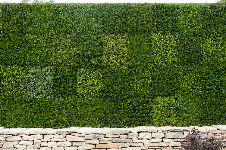 A green wall of heathers,  Heathers in Harmony show garden, designed by Will Quarmby, Hampton Court Flower Show 2011.