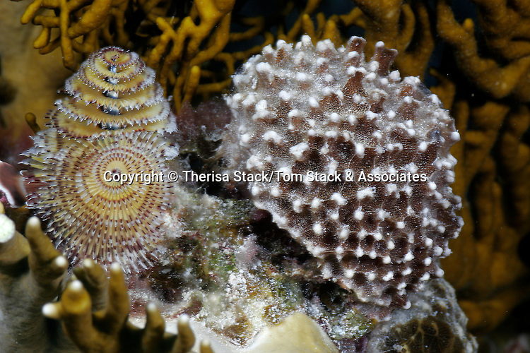 Coral and Christmas Tree worms