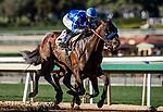 02-01-20 San Marcos Stakes and Undercard Santa Anita