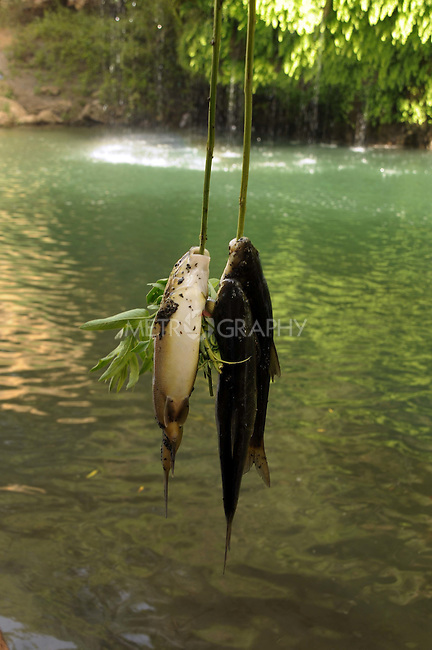 CHUMI GOALEYA, IRAQ: Recently caught fish hang reads.<br /> <br /> Fishermen high in the Kurdish mountains use nets to catch river fish.  <br /> <br /> Photo by Pazhar Muhammed