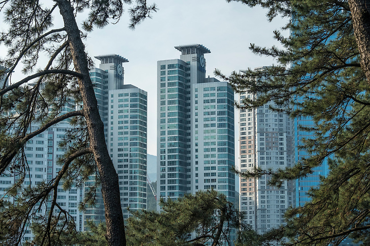 Misty pine forests form a cloak around tall skyscrapers, particularly as viewed from the peninsula of Taejongdae Park.