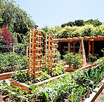 The early summer vegetable garden with beautiful trellis.