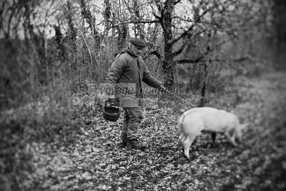 Europe/Europe/France/Midi-Pyrénées/46/Lot/Env de Lalbenque: Christain Constant s'initie  au cavage  avec le cochon, (Recherche) des truffes sur le causse  avec Mr Oulié, Trufficulteur
