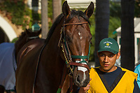 DEL MAR, CA. SEPTEMBER 4: #6 Bolt d'Oro enters the walking ring before the Del Mar Futurity (Grade l) on September 4, 2017 at Del Mar Thoroughbred Club in Del Mar, CA. (Photo by Casey Phillips/Eclipse Sportswire/Getty )