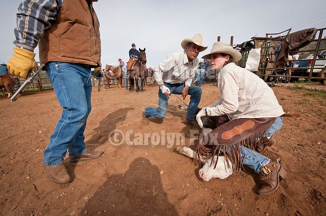 Calf marking and branding with the Steve and Kelly Wooster Outfits, Copperopolis, Calif.