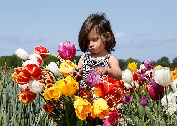 De Pluktuin in Lisse. Mensen kunnen hier tegen betaling zelf tulpen plukken. Meisje tussen de tulpen