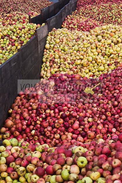 Europe/France/Bretagne/35/ Ille et Vilaine/ Bédée: Tas de pommes chez Loïc Berthelot ; artisan-cidrier au cellier du Bois d'Albret à Bédée