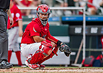 24 February 2019: St. Louis Cardinals catcher Jeremy Martinez glances back to the dugout during a Spring Training game against the Washington Nationals at Roger Dean Stadium in Jupiter, Florida. The Cardinals fell to the Nationals 12-2 in Grapefruit League play. Mandatory Credit: Ed Wolfstein Photo *** RAW (NEF) Image File Available ***