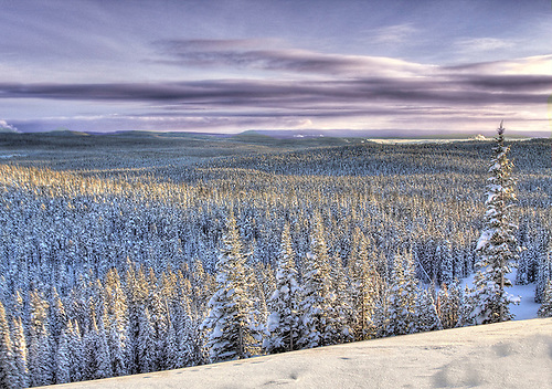 A panoramic view of Yellowstone National Park in winter from the foot of Mount Washburn