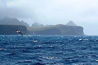 Campbell Island Coastline