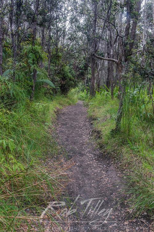 USA, HI, Big Island, Volcanoes NP, Halemaumau Trail