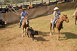 Spring cattle marking, Joses Ranch, Calaveritas, Calif.