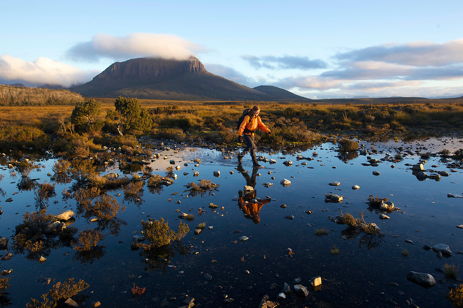 .Typical Overland track landscape with walkers on duck boards to protect the humid ecosystem of button grass....paysage typique de l'overland track avec des passerelles (duck board) pour portéger les zones humides button grass (gymnoschoenus sphaerocephalus)