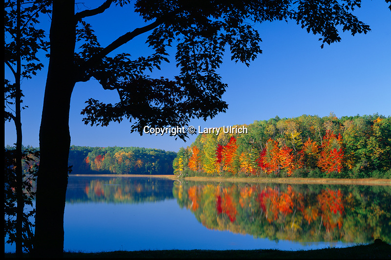 Red maple,  Guernsey Lake<br /> Pere Marquette State Forest<br /> Lower Peninsula<br /> Kalkaska County,  Michigan