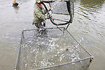 Sean Van Sommeran Putting Leopard Shark Into Pen