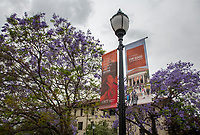 The Occidental College campus during Alumni Reunion Weekend on Friday, June 21, 2019.<br />